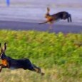 """After a rather pronounced bounce into Miami International Airport the Capt. came on the cabin intercom and said. """"Just as I landed I saw a family of rabbits crossing the […]"""