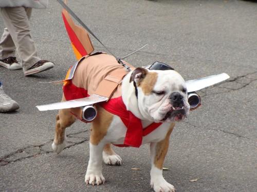 DogAirplanePoochParade-e1307363646426.jp