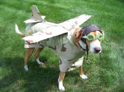 airplane-dog-costume-e1307363596329.jpg