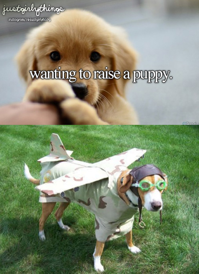 airplane-dog-costume2