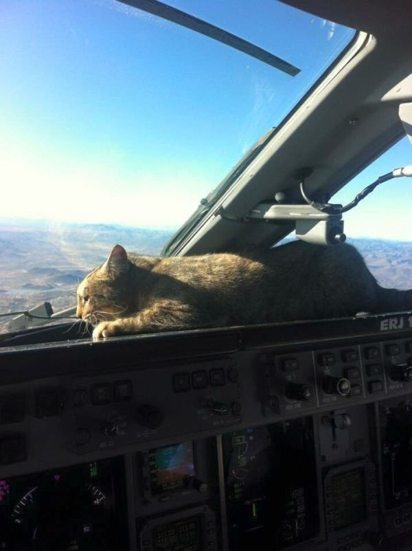 Cat one approach