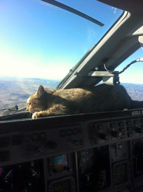Cat-one-approach.jpg