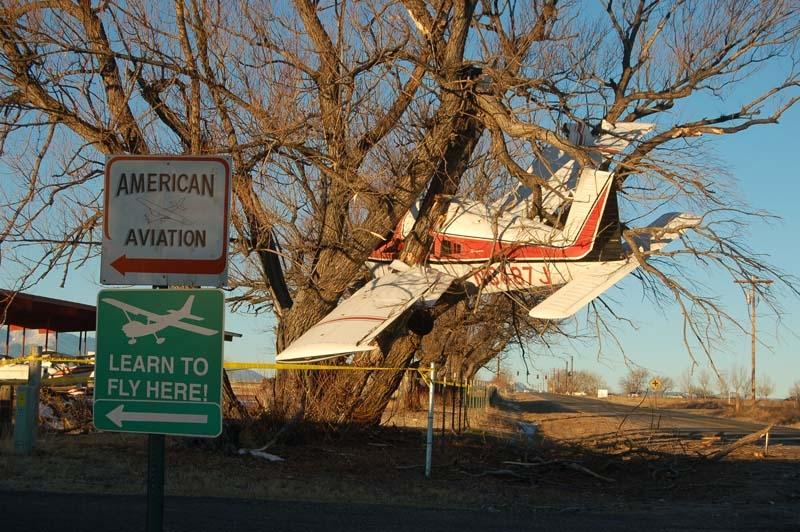Plane-in-a-Tree.jpg